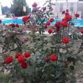 Розы как в бот.саду!)
