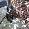 Вас встречает сторожевой пес. Думали настоящий))))